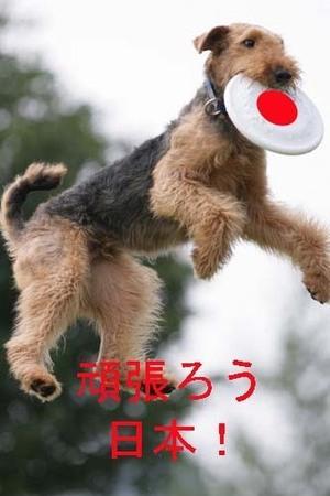 Tosufechi