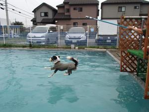 Dive4